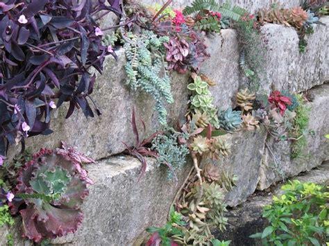 Botanical Gardens San Antonio And Succulent Wall On Pinterest Succulent Wall Garden For Sale