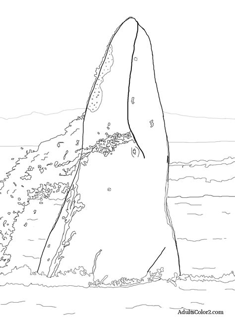 fin whale coloring page fin whale pages coloring pages