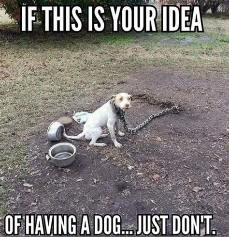 how to stop my dog pissing in the house 25 best ideas about animal rights on pinterest animal