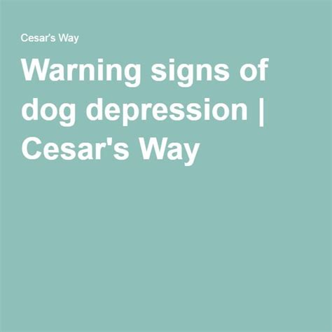 signs of depression in dogs 210 best images about paws on anxiety anxiety medication and puppys