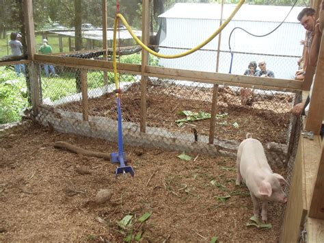 Backyard Piggery Business by Odorless Pig Technology Farming Hawai I