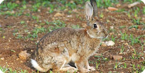 alimentazione conigli coniglio tecniche di allevamento alimentazione razze
