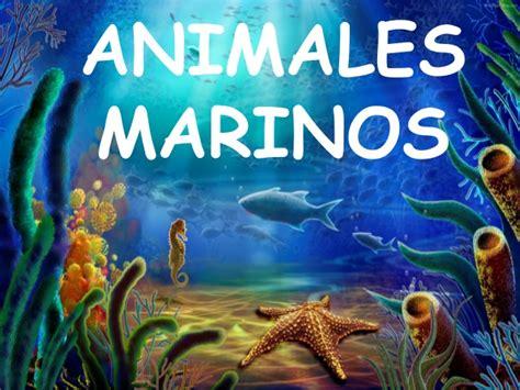 fotos animales marinos animales marinos