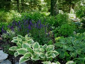 plantes 224 l ombre et en terrain humide pratique fr