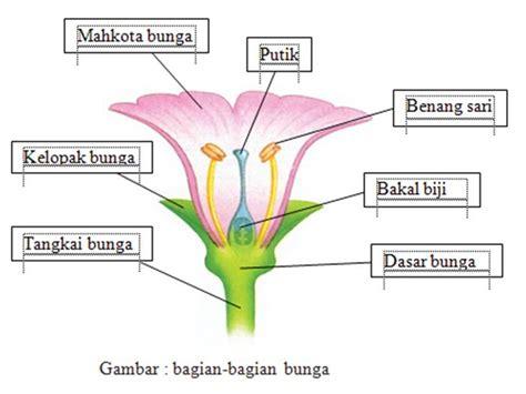 Benih Biji Bunga Tulip Mania tentang bunga dan buah bunga tumbuhan