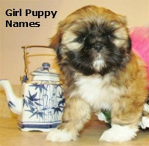 names boy shih tzu names for a brown select from hundreds of choices