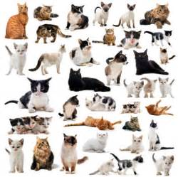 types of cats search different types of cats myideasbedroom com