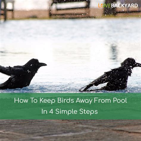 how to keep birds away from pool in 4 simple steps apr 2018