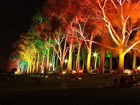 color ideas tree light up