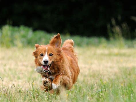 healthiest breeds 10 healthiest breeds petmd