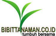 Bibit Cengkeh Bandung grosir bibit tanaman cengkeh murah unggul di