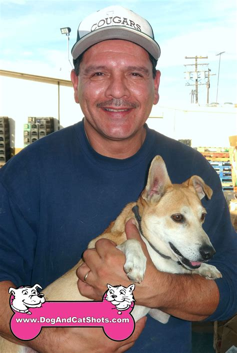 corgi puppies northern california low cost and cat in northern california corgi archives low cost and