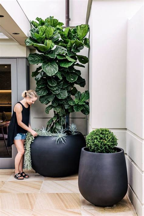 in door plants pot video three four plants argements 17 best ideas about large flower pots on pinterest