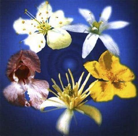 remedy fiori di bach rescue remedy