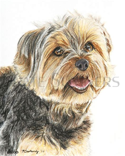 dogs similar to yorkies terrier print painting 8x10 yorkie dogs o a jean haines