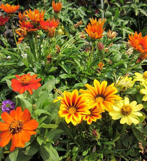 fall plants mountain gardening colorful flowers for fall planting