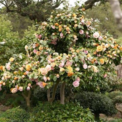 Garden Of Hayward Hours Hayward Japanese Gardens 532 Photos 180 Reviews