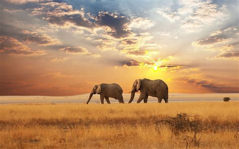 Landscape Pictures With Animals Beautiful Landscape With Elephants Hd Animals Wallpapers