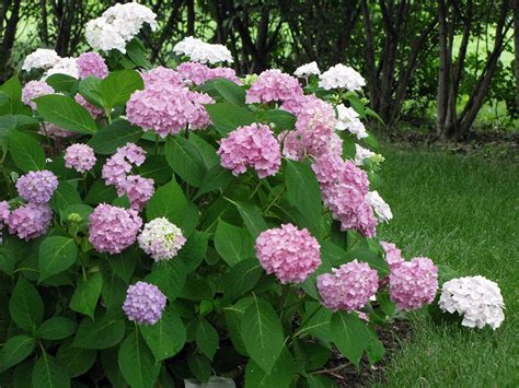 flowering shrubs wisconsin 10 power performers in the perennial garden wisconsin