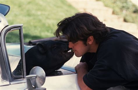 George Clooney Mourns His Dead Pig by 10 Pets In History Flavorwire
