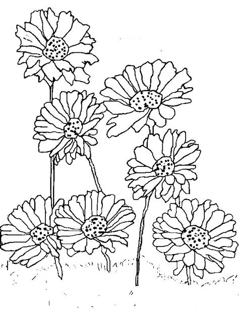 planting daisy flower coloring page  print