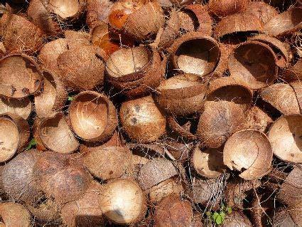 Murah Gitar Clayton Coconut Shell buy coconut shell from shri v m enterprises metter salem india id 814012