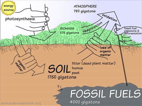 other words for diagram soil carbon cycle diagram gallery how to guide and refrence