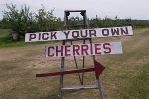 check out cherry season in wisconsin realfoodtraveler