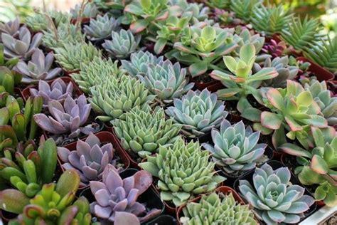quando innaffiare il giardino innaffiare piante grasse piante grasse consigli per