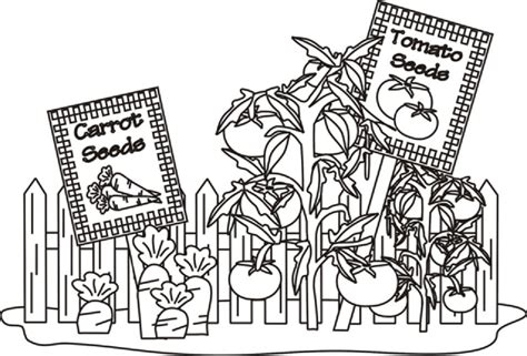 coloring pages of garden vegetables vegetable garden coloring pages food pinterest