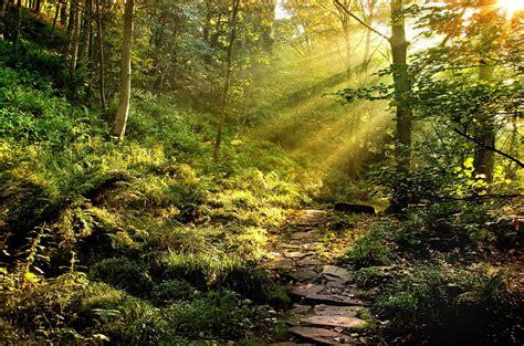 pretty walls download beautiful trees hd wallpapers free beautiful forest wallpaper download hd 5028 hd