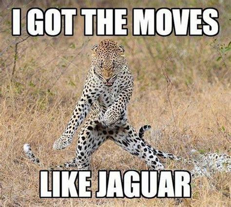 Jaguars Memes - i got the moves like jaguar funny animal dance image