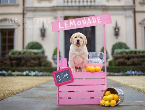 pics of puppies pink ribbon puppies pink ribbon puppies