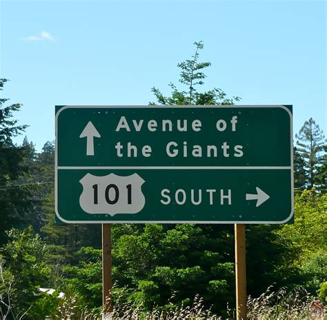the of a avenue of the giants journeylism nl