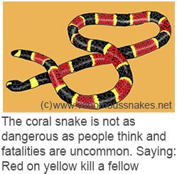 snake pattern red black yellow coral snake dangerously cannibalistic red on yellow