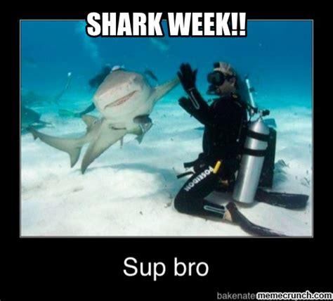 Funny Shark Meme - funny sharks memes