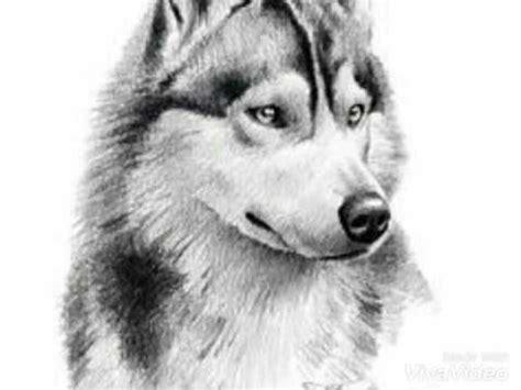 los mejores dibujos de animales los mejores dibujos hechos a lapiz youtube