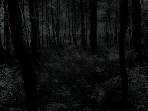 dark forest night image1 jpg forest wallpaper and background 1600x1200 id 180291