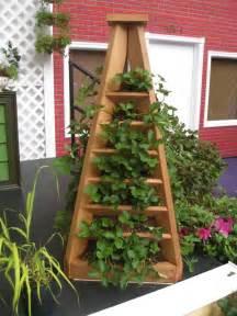 gallery for gt strawberry garden design