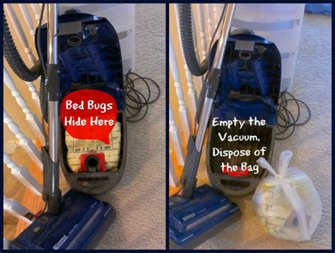 bed bug vacuum bed bugs hide in vacuum cleaners thrasher termite pest control