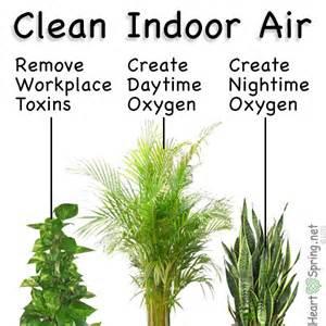 best houseplants for clean air indoor air filtering plants artwork heartspring net