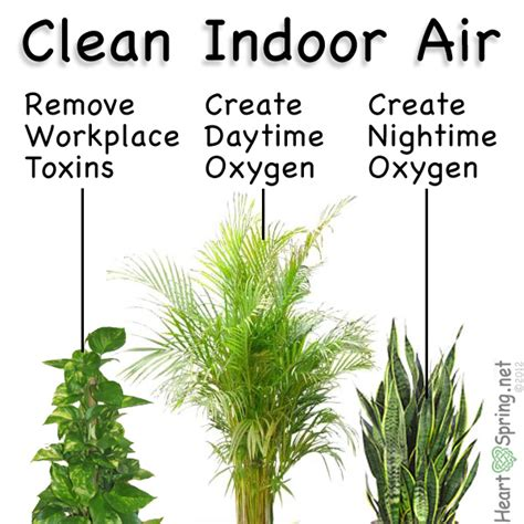 best houseplants for clean air indoor air filtering plants artwork heartspring net
