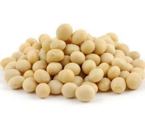 soia alimenti 10 alimenti contengono calcio casa di vita