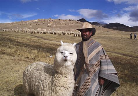 lua the llama and the mountain of books file bolivian alpaca jpg wikimedia commons