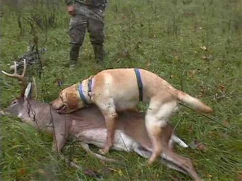 deer with dogs deer with dogs in virginia how to save money and do it yourself