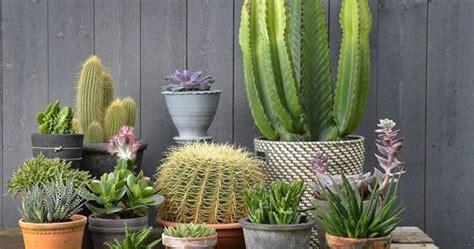jenis tanaman  tahan panas matahari informasi
