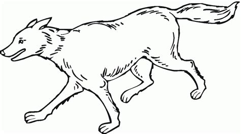 printable coloring pages wolf free printable wolf coloring pages for kids