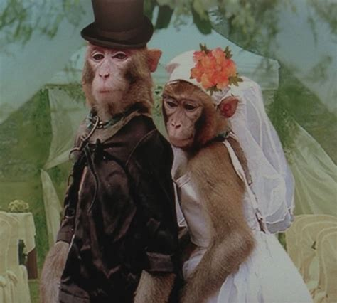 Monkey For Your Wedding by Monkey Wedding Gallery