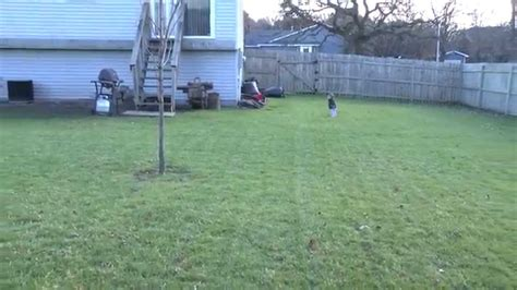 lawn renovation top soil grass seed fertilizer water diy youtube