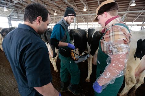 isu dairy farm iowa state university